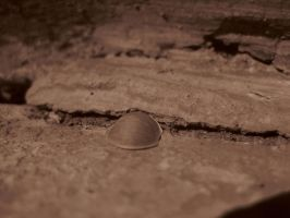 Shell by DanikaMilles