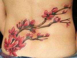 cherry blossom branch by Phedre1985