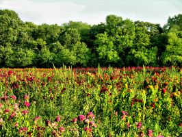 Field of Flowers 6 by FairieGoodMother