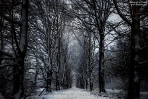 The Winter Path by Z-GrimV