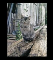 Cute but wild cat by Snuzzle