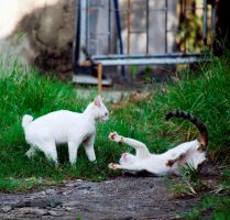 Cat Play by seny0rita