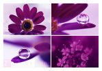 Purple by ninazdesign