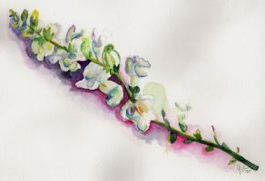 Snapdragon Still Life by jenthestrawberry