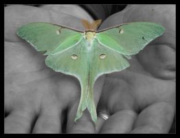 even a moth by CleverConveyence