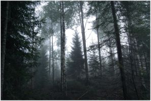 BG Forest Mist I by Eirian-stock