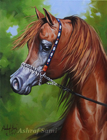 Arabian Horse ,, oil painting on canvas by sami5