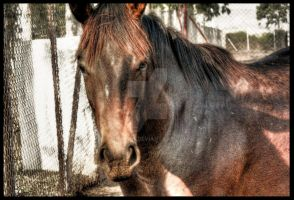Horse Stare by sharan