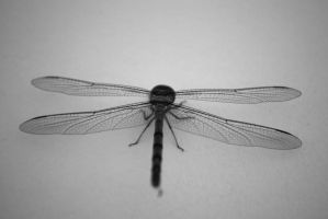 Insect by chanali