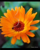 a touch of orange by pti-caillou