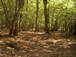 Hatfield forest 2 by pan77155