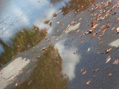 Sideways Autumn Puddle by PhotoOptimist