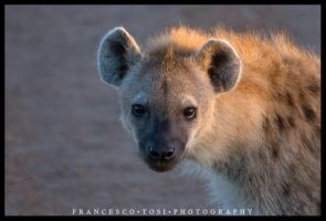 Kenya Wildlife 111 by francescotosi