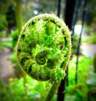 Facing an Alien Foetus? or a Fern in the Forest? by Cloudwhisperer67