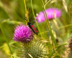 Red Spotted Bug by crispynoodle