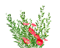 PNG Garden Flowers by KmyGraphic