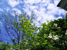 Of Skies and White Lilacs 1 by Shockbox