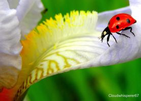 Ladybug Going Downtown by Cloudwhisperer67