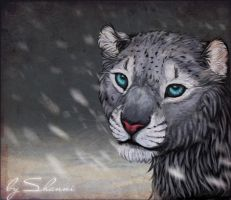 Snow Leopard by madShanni