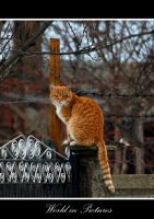 Cat 2 by WorldInPictures