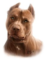 Red Pitbull Portrait by RedEyedDemon