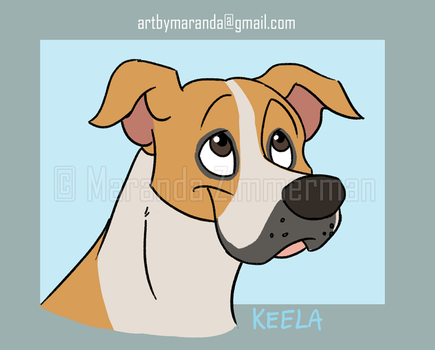 Keela-the-pit-bull by Coloran