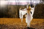 Sunrise for the white witch by Imagination-HB