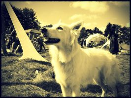 The white dog by Silence-in-your-head