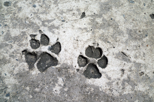Pawprints on Concrete. by monsterseverywhere
