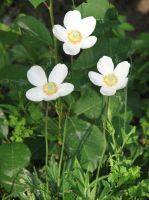 Stock: White flowers by Think-Outside-Of-Box