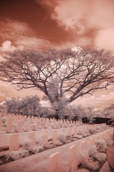 IR photography (4) by zickrawrs