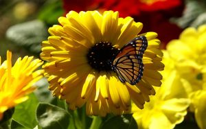 Butterflies and Marigolds by ElitistArab