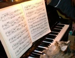 Sight Reading Kitty by SerenityPhoenix