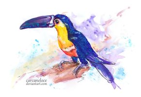 Red-breasted Toucan by Carcaneloce