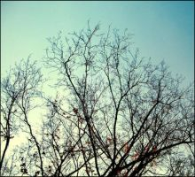 Branches by lacieg