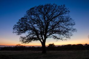Oaky Sunset by BuuckPhotography