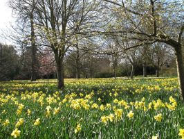 Dafs at Hampton Court by Ommadawn
