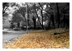 The Autumn Leaves by marcis