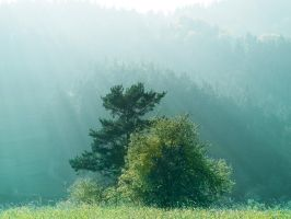 Trees in fog by odina222