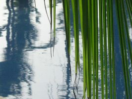 Palm and Pool by jlhcrawford