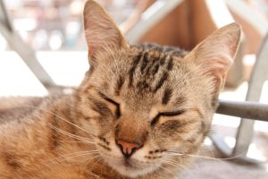 Sleeping cat by AndreaP95