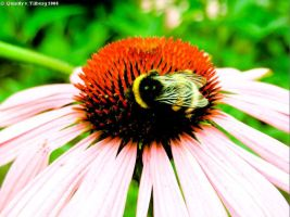 A bee. And a flower. Yeah. by Quintly