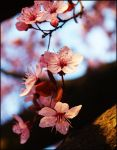 Spring on its way 2 by c1p0