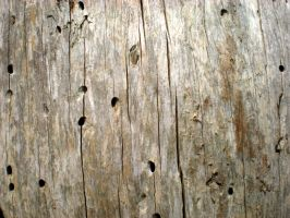 Stock Textue - Woodgrain with holes by rockgem