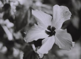 Black AND White Flower by Boz-Mon