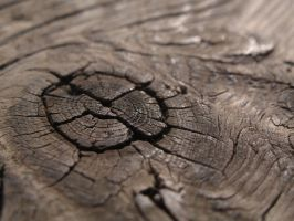 Wood no.3 by Kr4mon