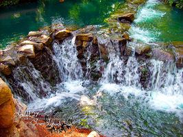 waterfall at busch gardens by loreleft27