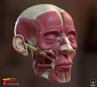 Human Head Ecorche Study Textured version by SergioMengual2012