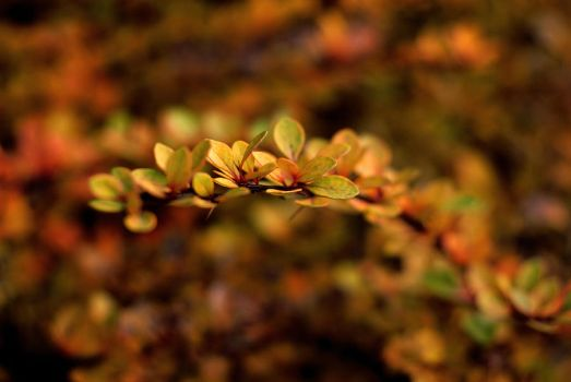 Leaves 2 by Olusia123