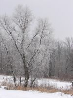 Snow-Covered Landscape 3 by FantasyStock